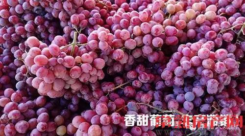 9.13华鑫天域葡萄义卖 献爱心助果农圆梦