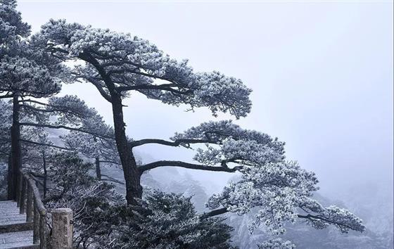 常熟人未来将3h直达黄山更可以半价冬游黄山