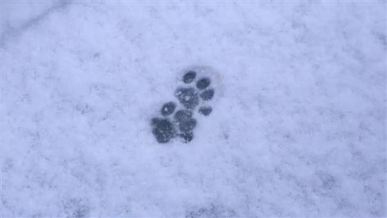 真的要下雪了接下来几天常熟人要准备好了