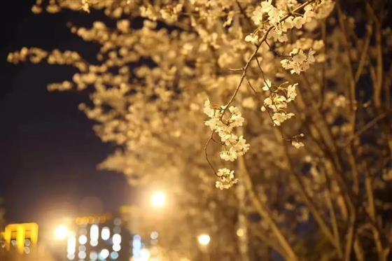 仁恒河滨花园丨一场穿越花园的旅行