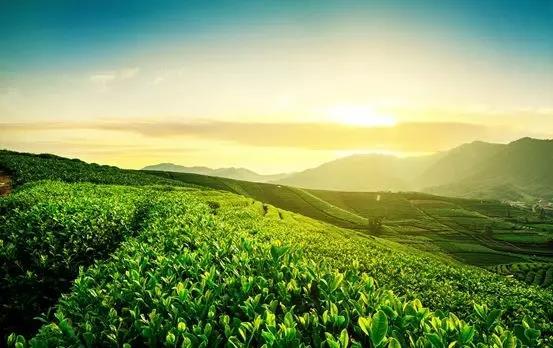 澜山悦庭|屿你携手,绿化虞山,共赴好时光!