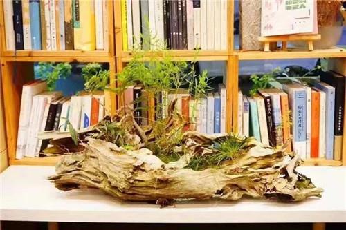 """公益捐书 """"书""""送爱与希望,绿都让知识无限延伸"""